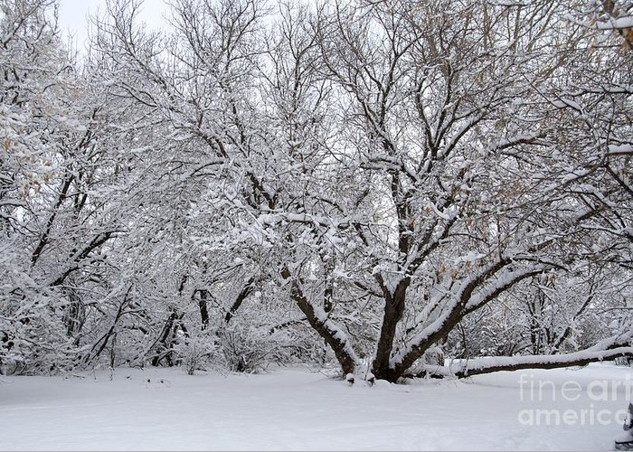 Winter Greeting Card featuring the photograph Winter Wonderland by Debbie Prediger