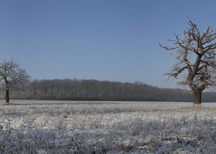 Hoar Frost Greeting Card featuring the photograph Winter Wonderland by Nick Atkin