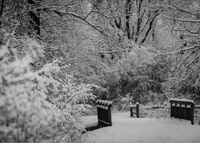 B&w Greeting Card featuring the photograph Winter Wonderland by Sebastian Musial