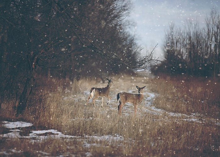 Deer Greeting Cards