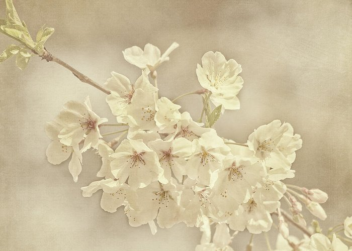 Flower Greeting Card featuring the photograph Wisdom by Kim Hojnacki