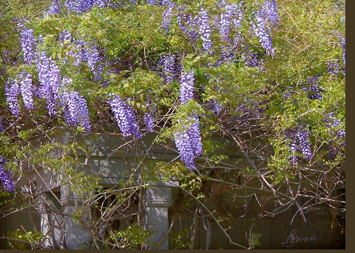 Wisteria Greeting Card featuring the photograph Wisteria by Bonnie Willis