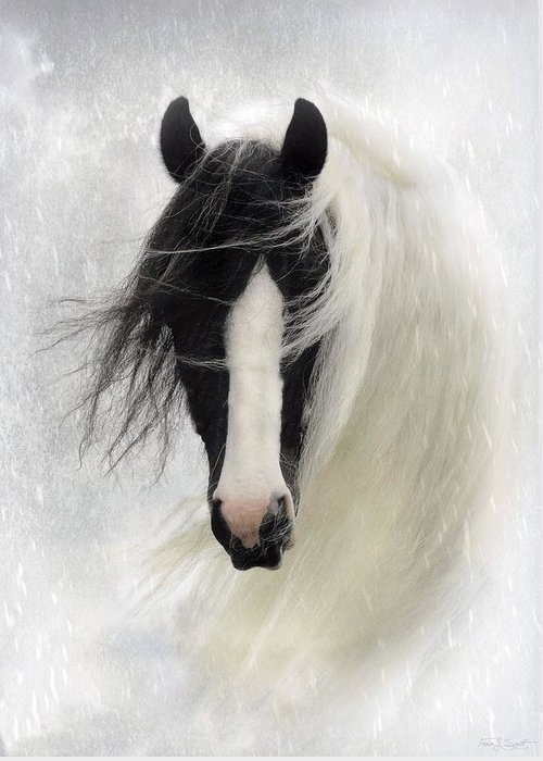 Horses Greeting Card featuring the photograph Wisteria by Fran J Scott