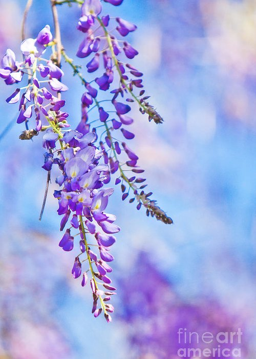 Flower Greeting Card featuring the photograph Wisteria by Joan McCool