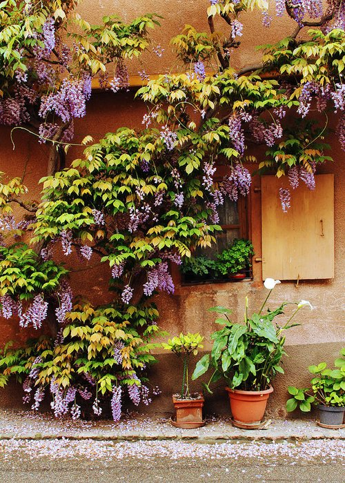 Wisteria Greeting Card featuring the photograph Wisteria On Home In Zellenberg 4 by Greg Matchick