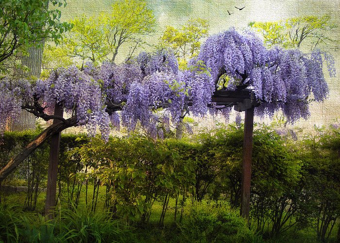 Spring Greeting Card featuring the photograph Wisteria Trellis by Jessica Jenney