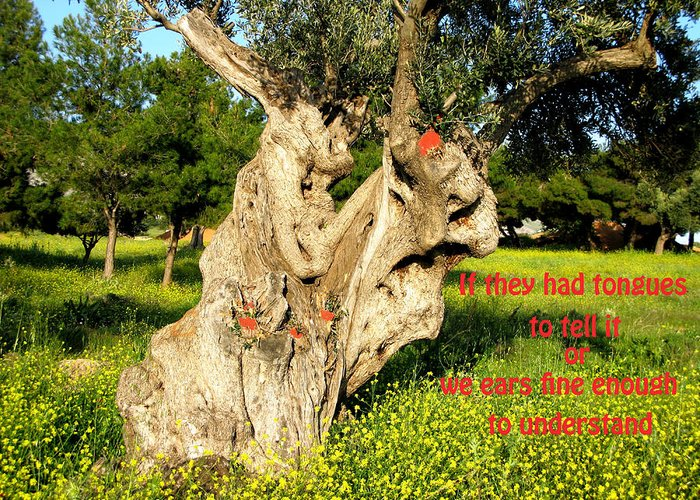 Old Age Tree Greeting Card featuring the photograph Witness by Andonis Katanos