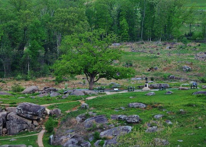 Devils Den Greeting Card featuring the photograph Witness Tree Devils Den by William Fox