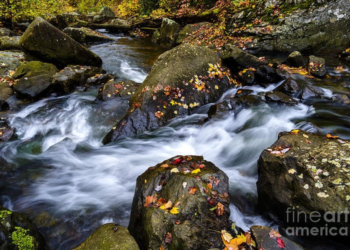 New River Gorge Greeting Card featuring the photograph Wolf Creek Autumn by Thomas R Fletcher