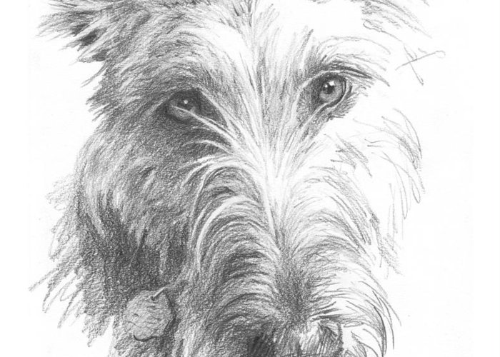 <a Href=http://miketheuer.com>www.miketheuer.com</a> Wolf Hound Pencil Portrait Greeting Card featuring the painting Wolf Hound Pencil Portrait by Mike Theuer
