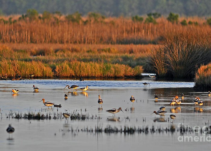 Wetland Greeting Card featuring the photograph Wonderful Wetlands by Al Powell Photography USA
