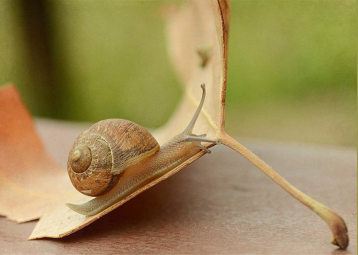 Gastropod. Snail Greeting Card featuring the photograph Wonderland by Fraida Gutovich