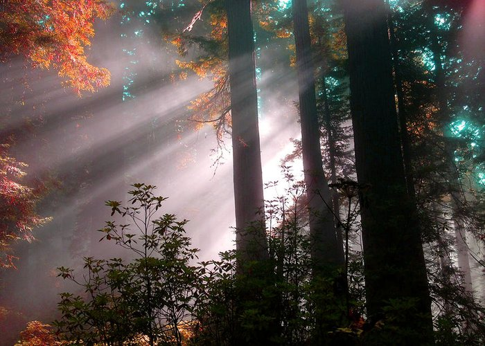 Redwood National Forest Greeting Card featuring the photograph Wonderland Sunbeams by Lilliana Autumn