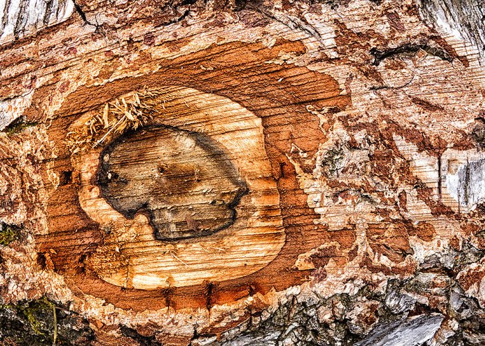Wood Greeting Card featuring the photograph Wood Detail by Matthias Hauser