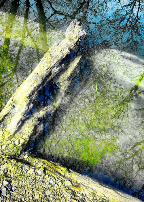 Abstract Greeting Card featuring the photograph Wood Reflections by Olivier Le Queinec