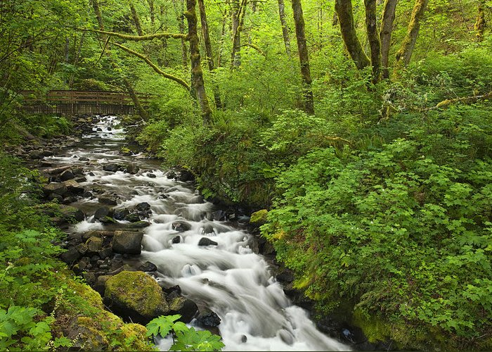 River Greeting Card featuring the photograph Wooded Stream In The Spring by Andrew Soundarajan