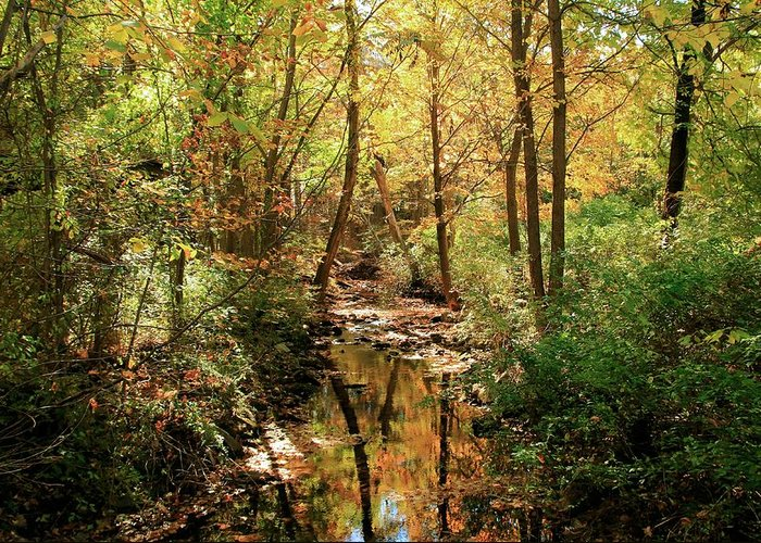 Woodland Brook Greeting Card featuring the photograph Woodland Brook by Robert McCulloch