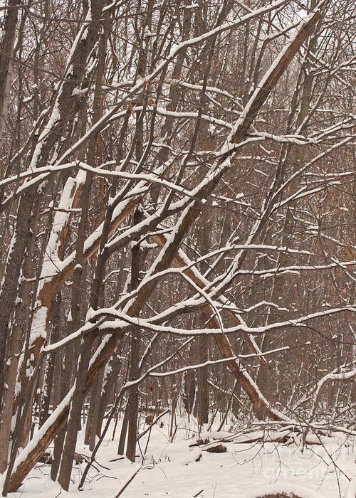 Snow Greeting Card featuring the photograph Woodland Winter by Ann Horn