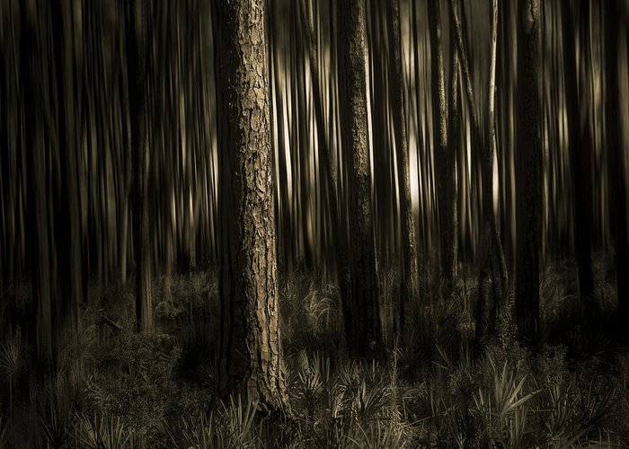 Sepia Greeting Card featuring the photograph Woods by Mario Celzner