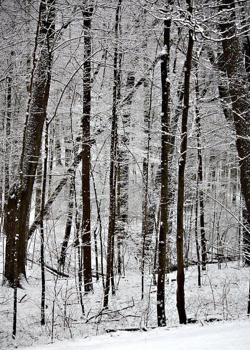 Woods On A Snowy Night Greeting Card featuring the photograph Woods On A Snowy Night by Penny Hunt