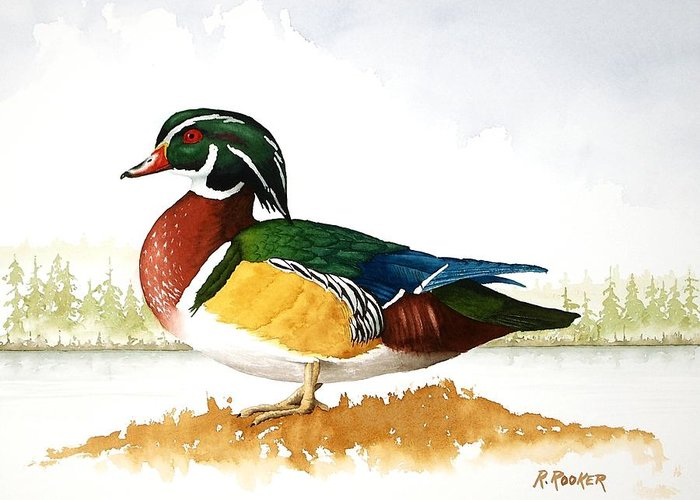 Duck Greeting Card featuring the painting Woody On The Lake by Richard Rooker