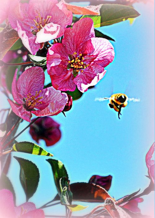 Spring Greeting Card featuring the photograph Working by Lisa Holland-Gillem
