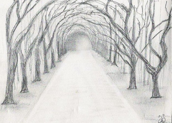 Wormsloe Greeting Card featuring the drawing Wormsloe by Jessica Phillips-Hight
