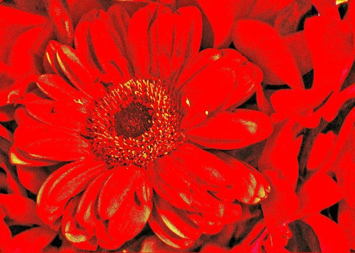 Red Greeting Card featuring the photograph Wow Red by Jody Lane