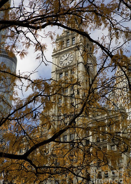 Wrigley Greeting Card featuring the photograph Wrigley Building In Autumn by Leslie Leda