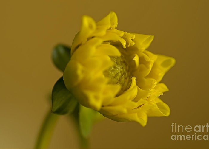 Pacific Greeting Card featuring the photograph Yellow And Green by Nick Boren
