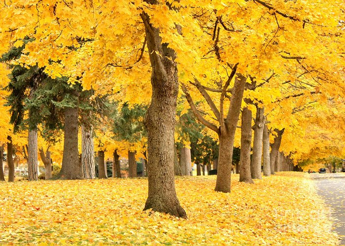 Autumn Greeting Card featuring the photograph Yellow Autumn Wonderland by Carol Groenen