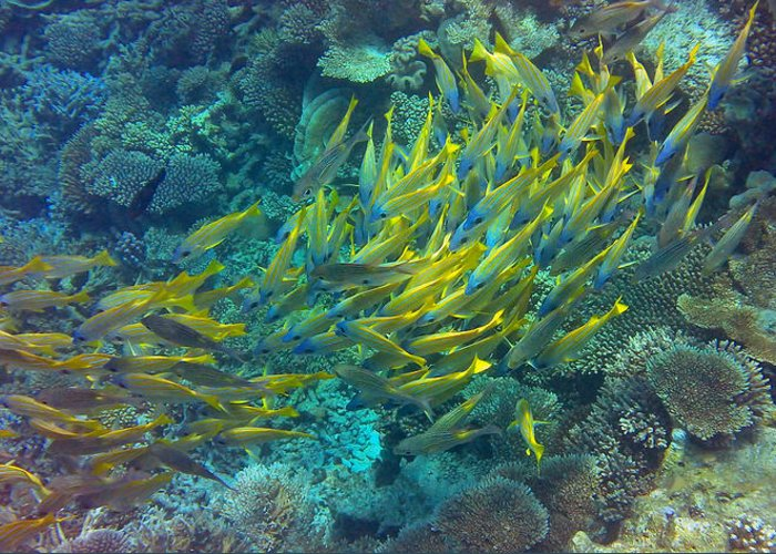 Tropical Fish Greeting Card featuring the photograph Yellow by Corinne Rhode