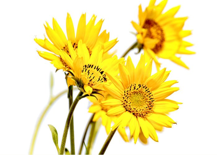 Daisies Greeting Card featuring the photograph Yellow Country Wildflowers by Athena Mckinzie