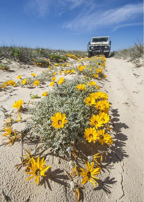 Didelta Carnosa Greeting Card featuring the photograph Yellow Daisies (didelta Carnosa) by Science Photo Library