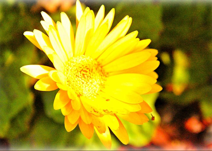 Yellow Greeting Card featuring the photograph Yellow Gebera by Jennifer Groff