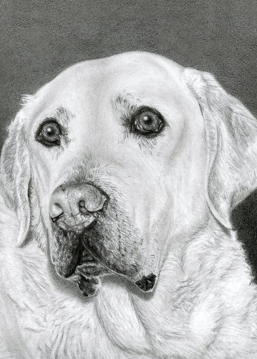 Charcoal Dog Drawing Drawings Greeting Cards