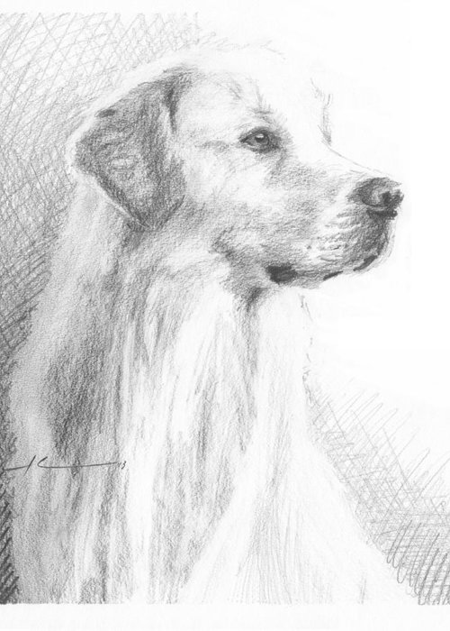 <a Href=http://miketheuer.com Target =_blank>www.miketheuer.com</a> Yellow Labrador Show Dog Pencil Portrait Greeting Card featuring the drawing Yellow Labrador Show Dog Pencil Portrait by Mike Theuer