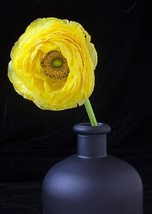 Ranunculus Greeting Card featuring the photograph Yellow Ranunculus In Black Vase by Garry Gay