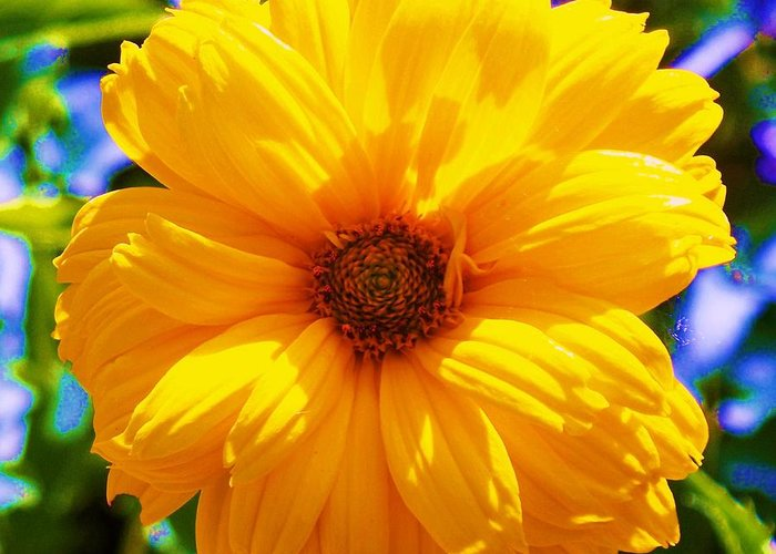 Flora Greeting Card featuring the photograph Yellow Sunflower by Eric Schiabor