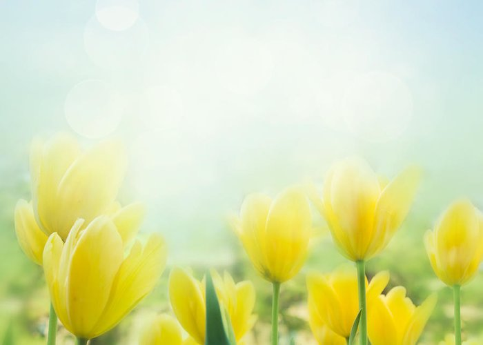 Abstract Greeting Card featuring the photograph Yellow Tulips by Mythja Photography