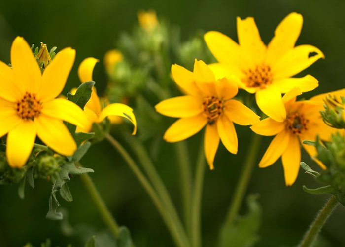 Flowers Greeting Card featuring the photograph Yellow Wildflowers by Terry Fleckney