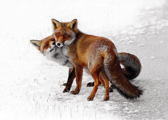 Love The Animal Photographs Greeting Cards