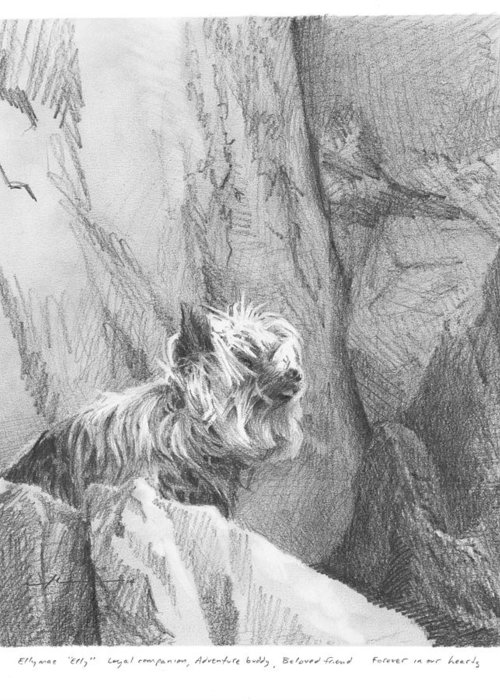 <a Href=http://miketheuer.com Target =_blank>www.miketheuer.com</a> Yorkie Dog On A Cliff Pencil Portrait Greeting Card featuring the drawing Yorkie Dog On A Cliff Pencil Portrait by Mike Theuer