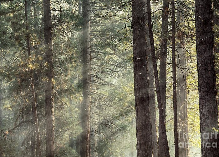 Beams Greeting Card featuring the photograph Yosemite Pines In Sunlight by Jane Rix