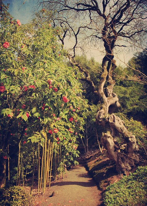 Uc Berkeley Botanical Garden Greeting Card featuring the photograph You'll Never Be Alone by Laurie Search