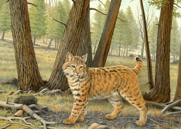 Wildlife Greeting Card featuring the painting Young Bobcat  by Paul Krapf