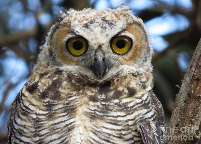 Hooter Greeting Card featuring the photograph Young Hooter by Craig Corwin