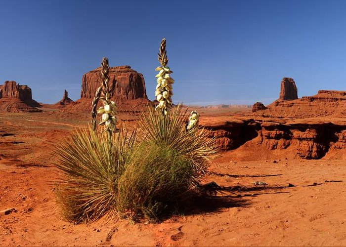 Tranquility Greeting Card featuring the photograph Yucca In Monument Valley by © Jan Zwilling