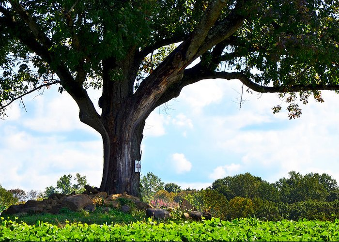 Alstede Farm Greeting Card featuring the photograph Yum Yum Tree by Maureen E Ritter