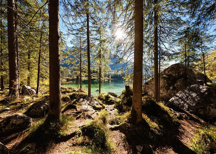 Tranquility Greeting Card featuring the photograph Zauberwald In Autumn by Jorg Greuel